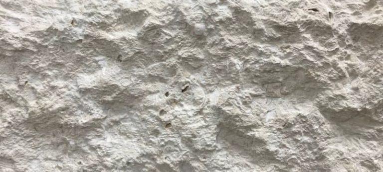 Atlantic Shell Stone Large Format Split Face